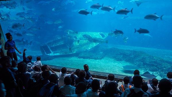 VIP Express - Durban Special - uShaka Marine World